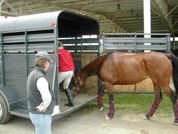 En hästtrasport och en häst.